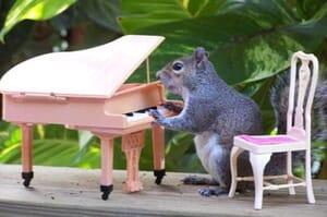 piano squirrel