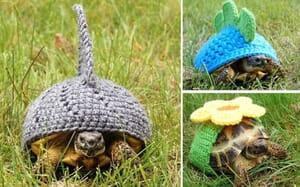 tortoise shell sweater