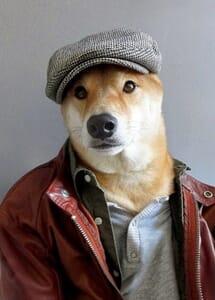 menswear dog4