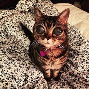 Matilda alien eyes