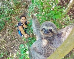 sloth e1467699717409