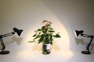 elowan plant robot hybrid mit