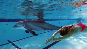 seaworld dolphin livekindly plant based 1