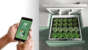 conceptual home garden1