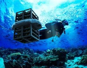 coral restoration system